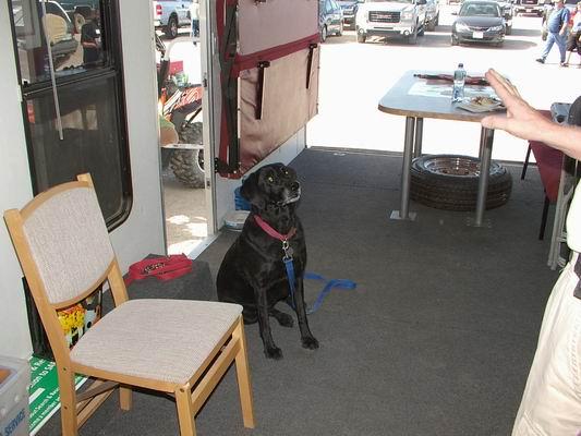 La Paz Co Search & Rescue Dog
